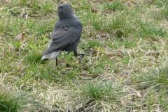 Я вас попрошу птичку нашу не обижать (с) Простоквашино