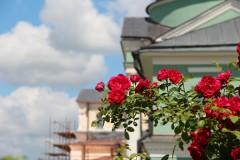 Оптинский цветник: розы...