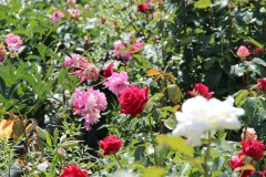 Оптинский цветник