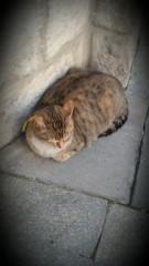 Оптинский Пасхальный кот))
