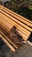 Пригрелся на солнышке :)