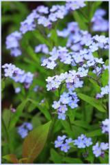 Любимые цветы из детства