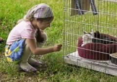 Котята вызывают восторг у детей...