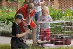 Дети то доставали котят,то убирали обратно в клетку.