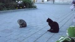 И среди котов встречаются хулиганы