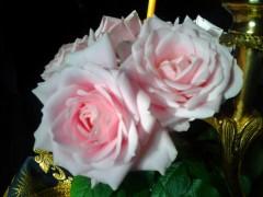 Розы в алтаре у Престола