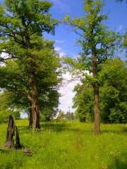 Дорога к Оптиной от Святого источника