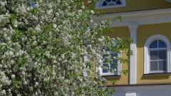 Цветы Оптины