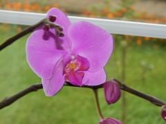 чудесные цветы из Любиного сада.