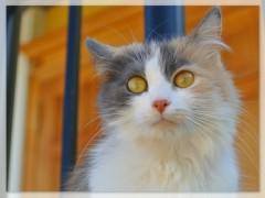 Котокошки Оптины 2015