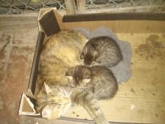 А у нас кошка, родила котят немножко ...