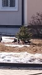 Весна) Грачи прилетели)))