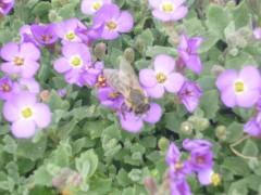 Пчелка, пчелка, жу-жу-жу. Кто съел мед, вам не скажу...