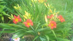 Цветы в Оптиной...