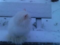 Дикая кошка, прожила в Оптиной почти пол года... потом приютили