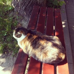 Самый-самый полный кот Оптиной
