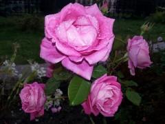 Оптинский цветник!