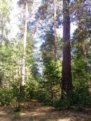 Оптинский лес