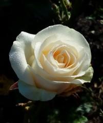 В мире цветения