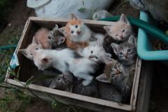 Все те же 11 кошаков, только крупнее..