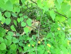 Дикое котэ в лесной чаще