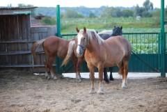 Место обитания коней (конюшня)