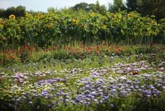 Цветы к празднику Успения