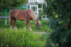 Конь в яблоках