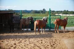 Место обитания коней