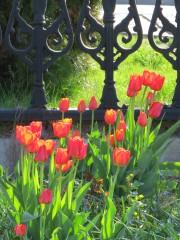 Цветы для победителей