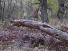 Вот такие создания водятся в оптинском лесу