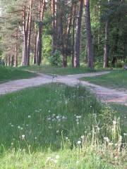 Дорога на источник Пафнутия Боровского