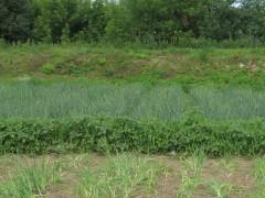 Оптинско-огородный ландшафт