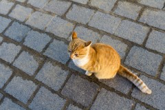 Солнечный котенок)