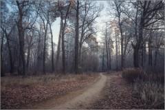 Тропинка в серебряный лес (снимок сделан 27 ноября 2014 г.)