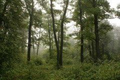 Туманное утро Воскресного дня_28 (4 сентября 2011 г.)