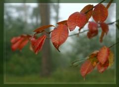 Осенняя палитра_2