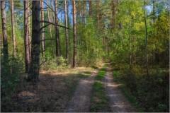 Прогулка по осеннему лесу ( Снимок сделан 9 сентября 2014 г.)