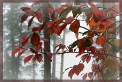 Осенняя палитра_1