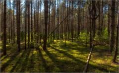 Тени сентябрьского леса ( Снимок сделан 11 сентября 2014 г.)