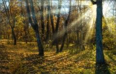 Солнечный день в лесу ( Снимок сделан 14 октября 2013 г.)