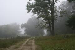 Туманное утро Воскресного дня_35 (4 сентября 2011 г.)