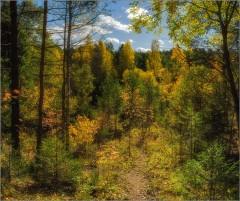 Осенний мотив (снимок сделан 28 сентября 2014 г.)