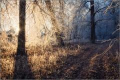 Свет, разгоняющий тьму (снимок сделан 24 ноября 2014 г.)