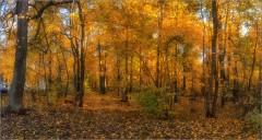 Осенняя палитра (Снимок сделан 3 октября 2014 г.)