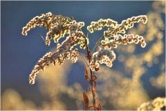 """""""Золотое дерево"""" ( 23 ноября 2012 г.)"""
