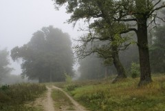 Туманное утро Воскресного дня_34 (4 сентября 2011 г.)