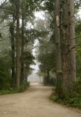 Туманное утро Воскресного дня_10 (4 сентября 2011 г.)