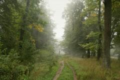 Туманное утро Воскресного дня_29 (4 сентября 2011 г.)