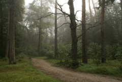 Туманное утро Воскресного дня_38 (4 сентября 2011 г.)